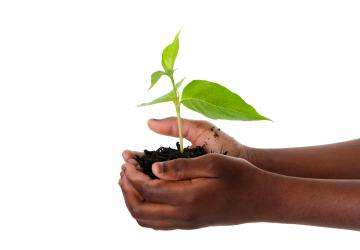Launch of African Agri-Business Engine for private sector agricultural finance